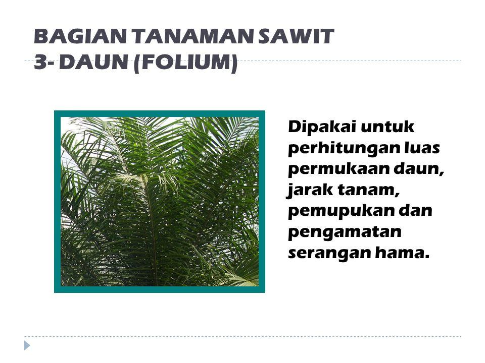 BAGIAN TANAMAN SAWIT 2- BATANG (CAULIS) Batang pokok tunggal, tidak berdahan dan mempunyai pelepah di ujungnya.