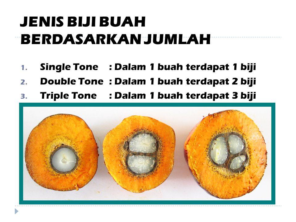 BAGIAN TANAMAN SAWIT 6- BIJI Merupakan bagian buah yang telah terpisah dari daging buah.
