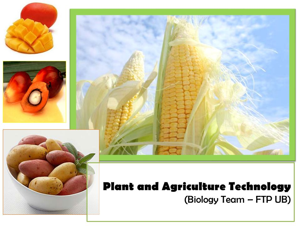 Plant and Agriculture Technology (Biology Team – FTP UB)