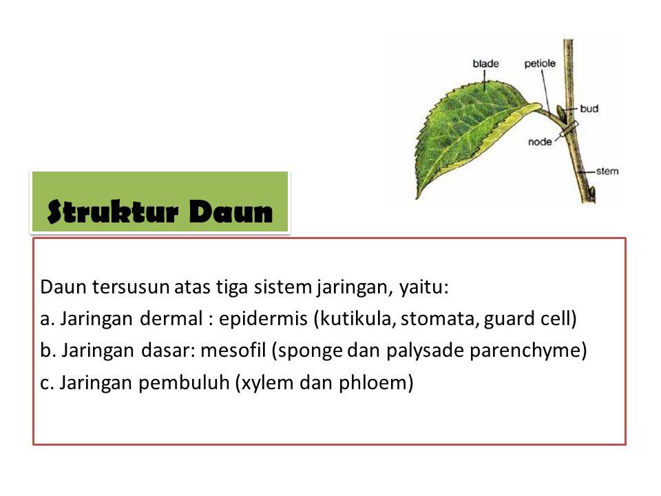 Daun tersusun atas tiga sistem jaringan, yaitu: a. Jaringan dermal : epidermis (kutikula, stomata, guard cell) b. Jaringan dasar: mesofil (sponge dan