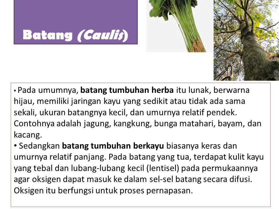 Pada umumnya, batang tumbuhan herba itu lunak, berwarna hijau, memiliki jaringan kayu yang sedikit atau tidak ada sama sekali, ukuran batangnya kecil,