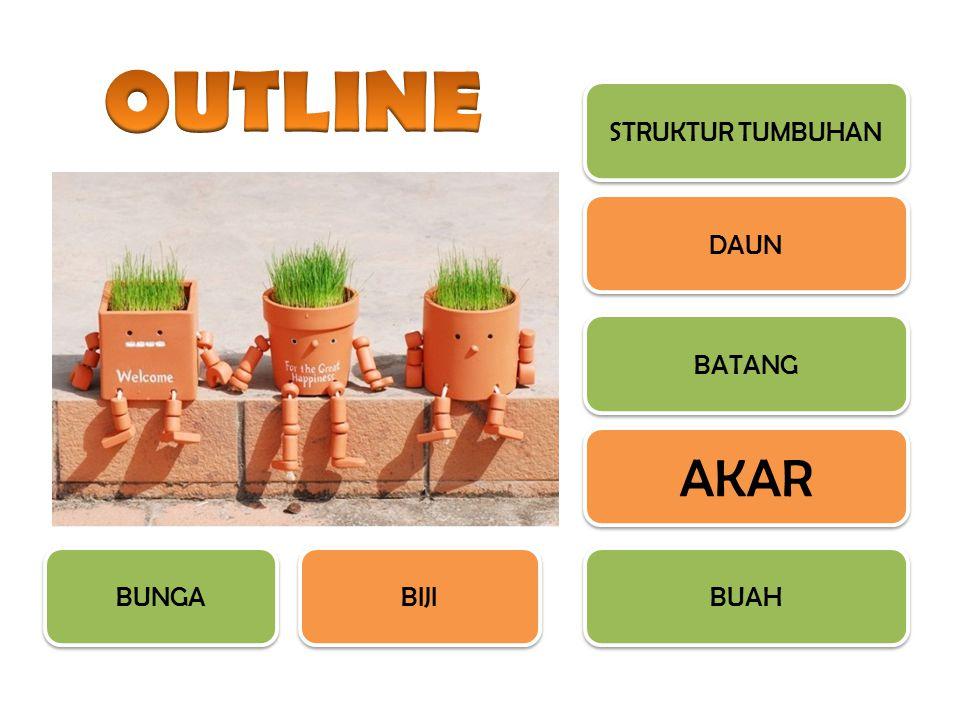 Akar tumbuhan merupakan struktur tumbuhan yang terdapat di dalam tanah.
