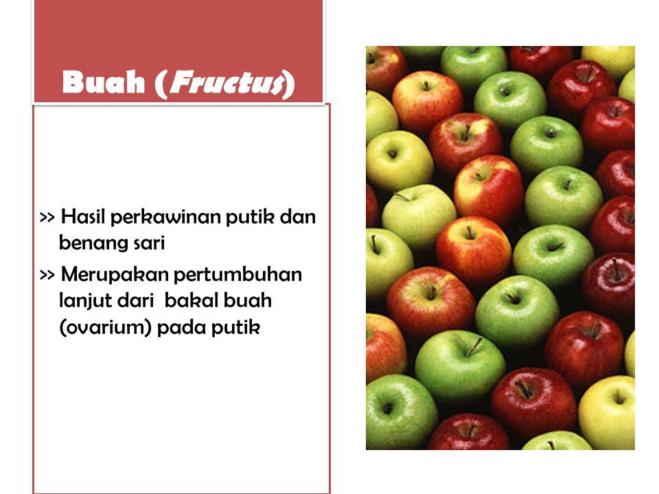>> Hasil perkawinan putik dan benang sari >> Merupakan pertumbuhan lanjut dari bakal buah (ovarium) pada putik Buah (Fructus)