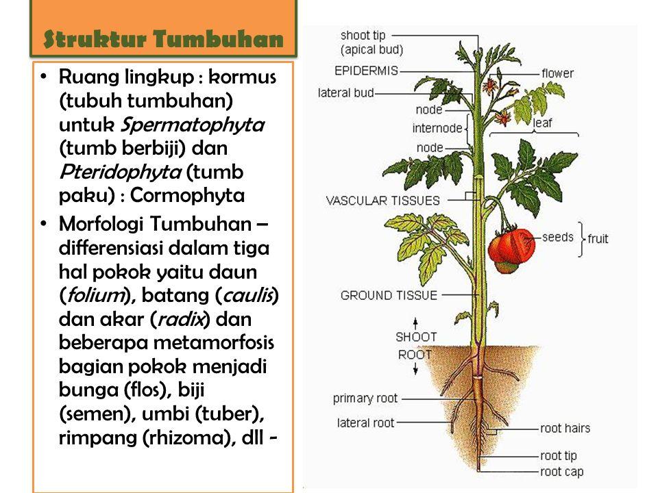 Ruang lingkup : kormus (tubuh tumbuhan) untuk Spermatophyta (tumb berbiji) dan Pteridophyta (tumb paku) : Cormophyta Morfologi Tumbuhan – differensias
