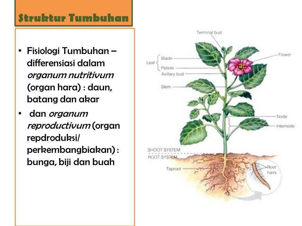 Fisiologi Tumbuhan – differensiasi dalam organum nutritivum (organ hara) : daun, batang dan akar dan organum reproductivum (organ repdroduksi/ perkemb
