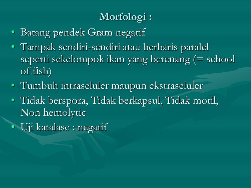 Morfologi : Batang pendek Gram negatifBatang pendek Gram negatif Tampak sendiri-sendiri atau berbaris paralel seperti sekelompok ikan yang berenang (=