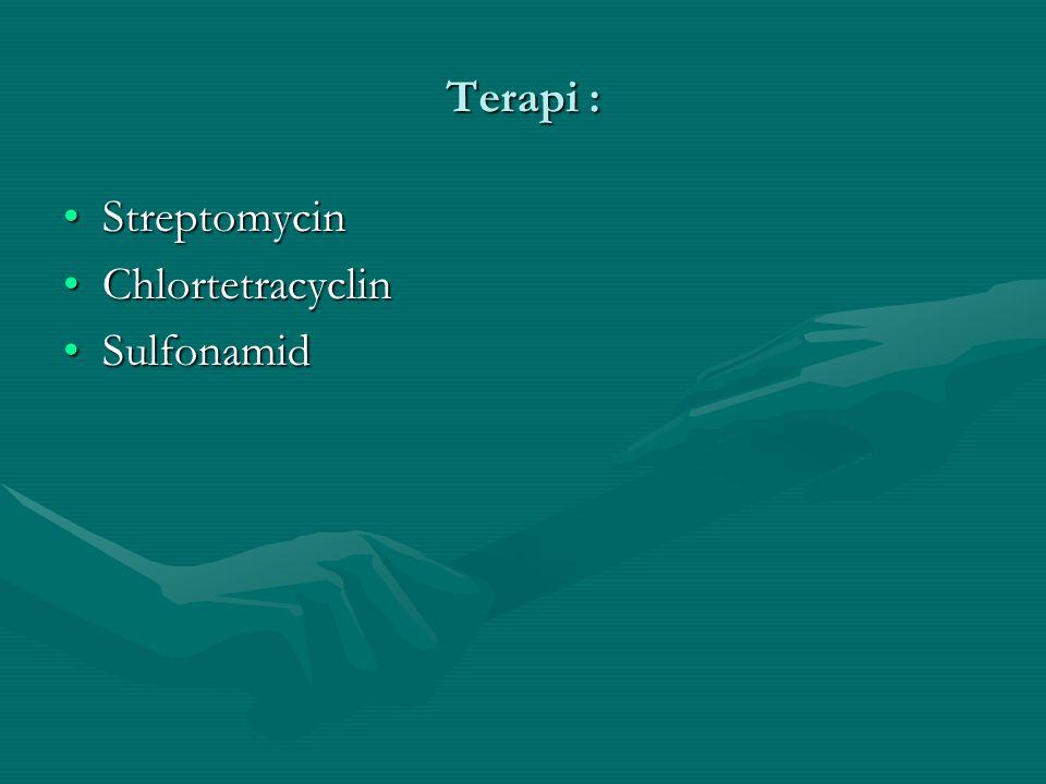 Terapi : StreptomycinStreptomycin ChlortetracyclinChlortetracyclin SulfonamidSulfonamid