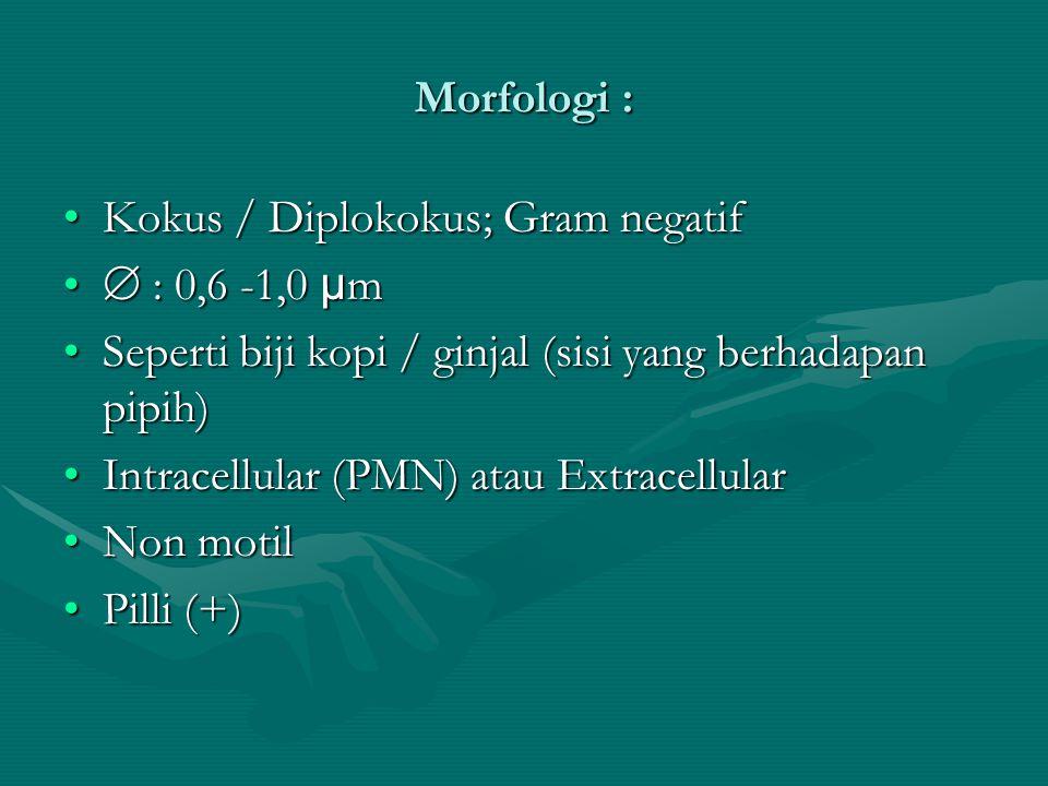 Morfologi : Kokus / Diplokokus; Gram negatifKokus / Diplokokus; Gram negatif  : 0,6 -1,0 µ m  : 0,6 -1,0 µ m Seperti biji kopi / ginjal (sisi yang b