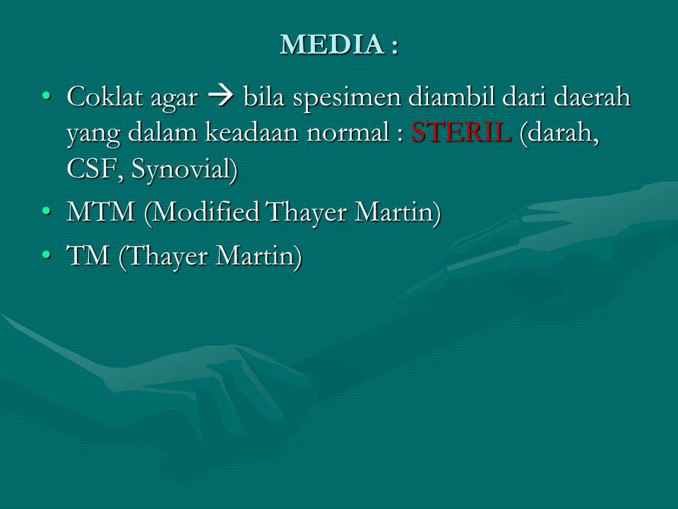 MEDIA : Coklat agar  bila spesimen diambil dari daerah yang dalam keadaan normal : STERIL (darah, CSF, Synovial)Coklat agar  bila spesimen diambil d