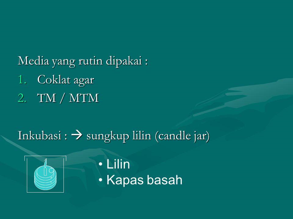 Media yang rutin dipakai : 1.Coklat agar 2.TM / MTM Inkubasi :  sungkup lilin (candle jar) Lilin Kapas basah