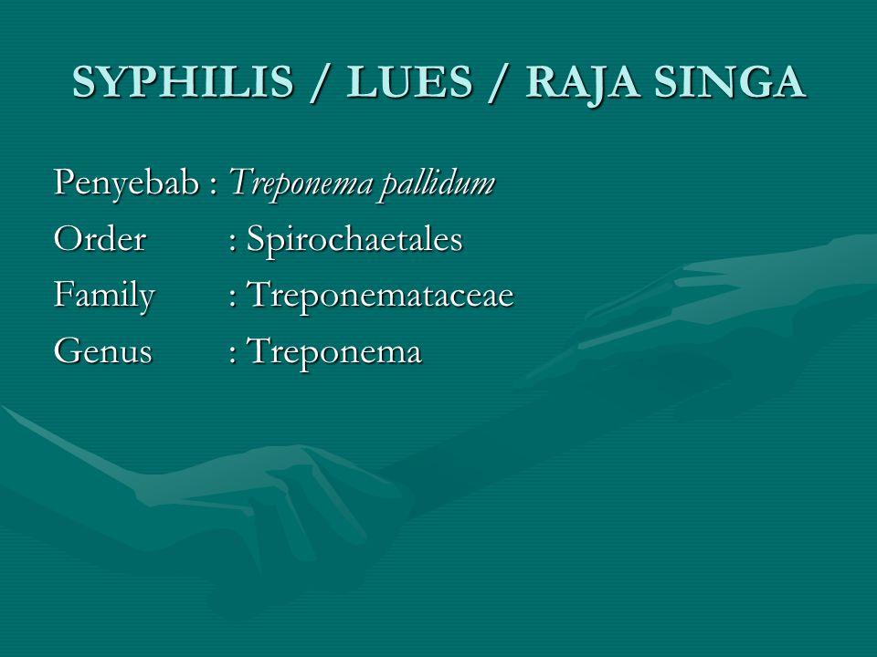 SYPHILIS / LUES / RAJA SINGA Penyebab : Treponema pallidum Order: Spirochaetales Family: Treponemataceae Genus: Treponema