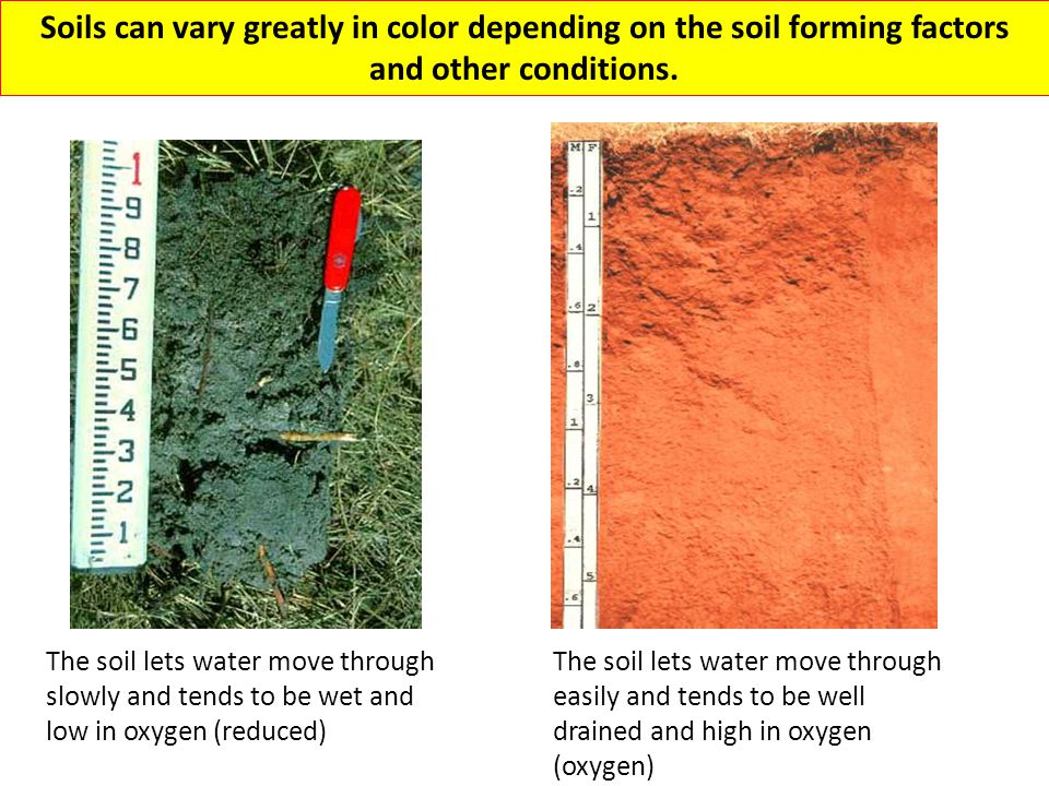 Soils can vary greatly in color depending on the soil forming factors and other conditions.