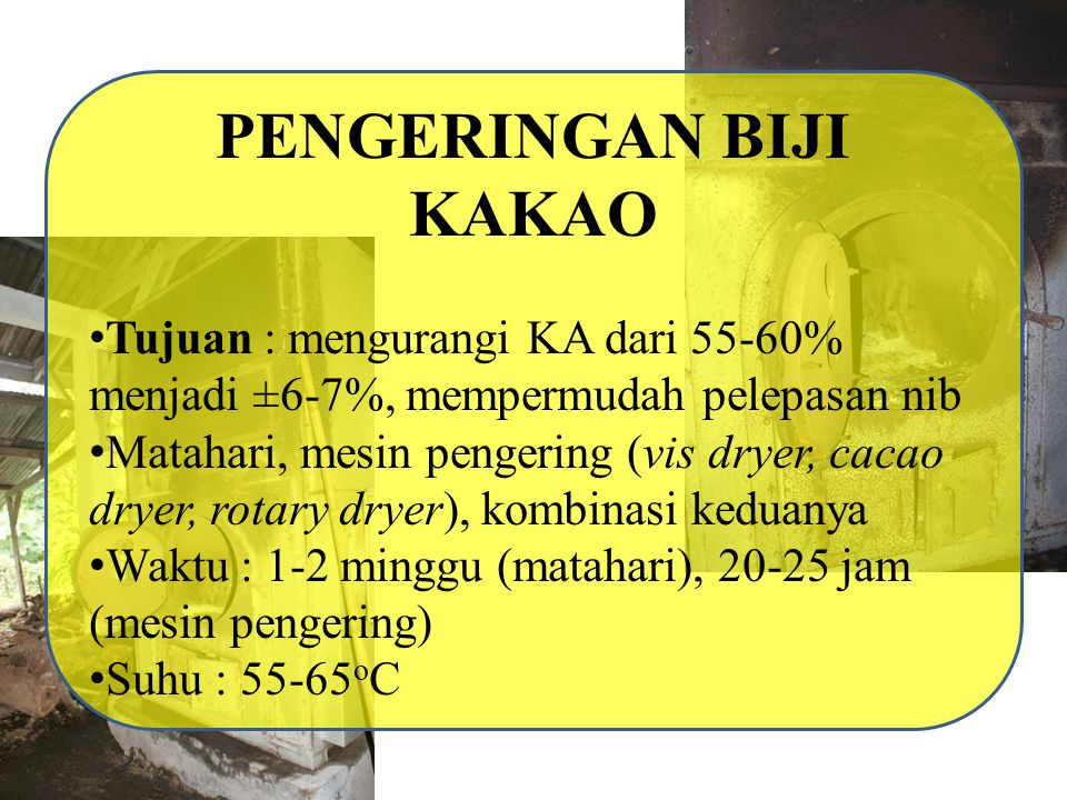 PENGERINGAN BIJI KAKAO PTPN XII Banjarsari Kapasitas Dryer 4,5 ton KA 6-7% Biji kakao yg dijemur 5-7 jam, suhu pengeringan (6 jam 70oC; 8 jam 60oC; 10 jam 55oC), bahan bakar solar (270 L/ton); kayu (3-5 m3/ton), pembalikan (6 jam 6x, 8 jam 4x, 3 jam 1x sampai kering) Biji kakao tidak dijemur, suhu pengeringan (4 jam 80oC; 8 jam 70oC; 8 jam 60oC; 10 jam 55oC), bahan bakar solar (290 L/ton); kayu (4-6 m3/ton)