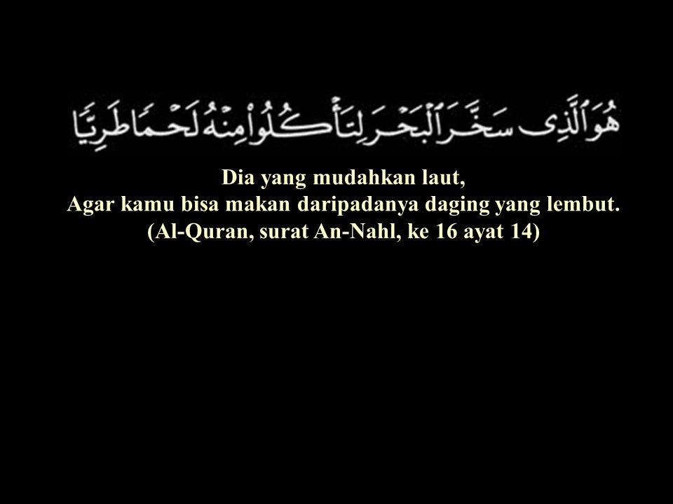 Dia yang mudahkan laut, Agar kamu bisa makan daripadanya daging yang lembut. (Al-Quran, surat An-Nahl, ke 16 ayat 14)