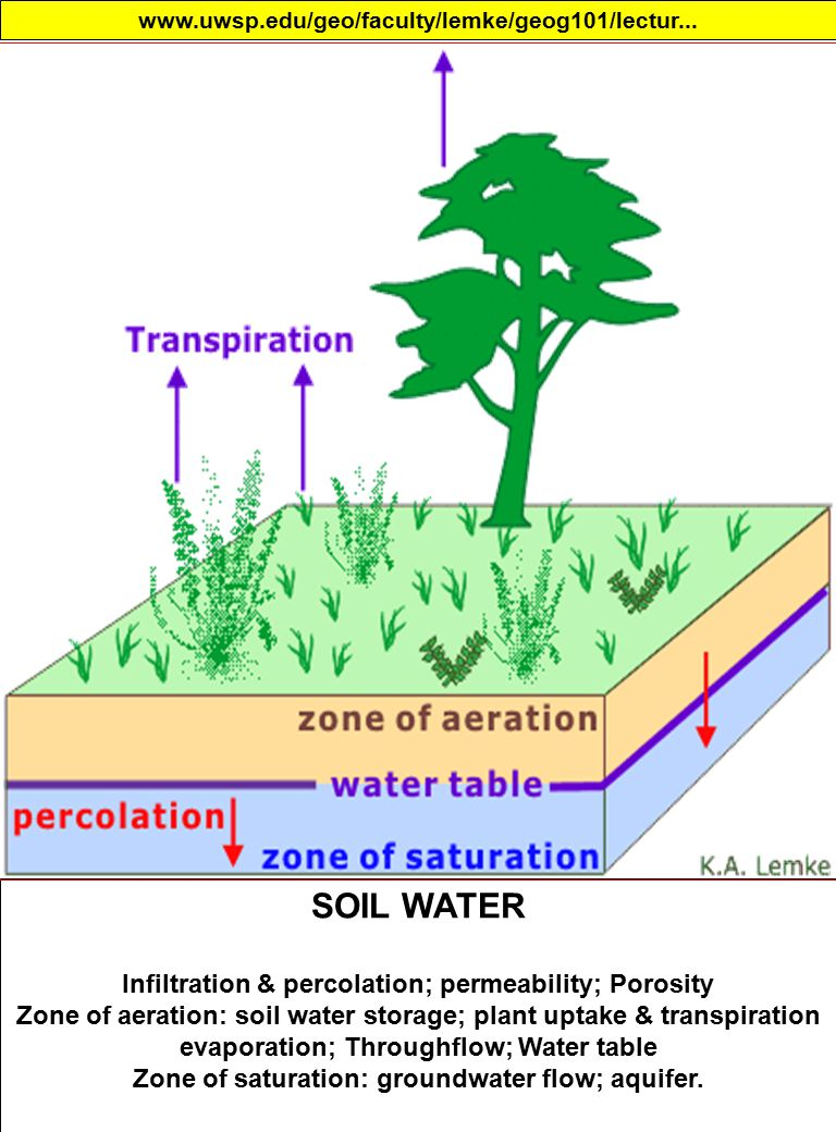 SOIL WATER Infiltration & percolation; permeability; Porosity Zone of aeration: soil water storage; plant uptake & transpiration evaporation; Throughflow; Water table Zone of saturation: groundwater flow; aquifer.