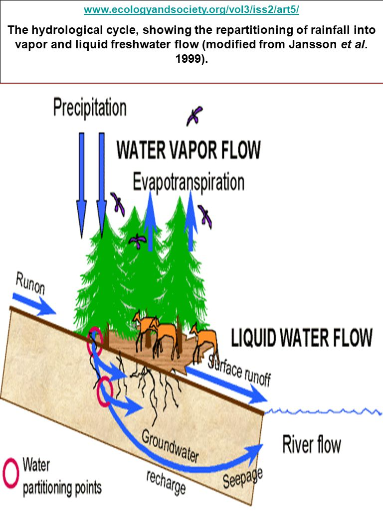 www.ecologyandsociety.org/vol3/iss2/art5/ The hydrological cycle, showing the repartitioning of rainfall into vapor and liquid freshwater flow (modified from Jansson et al.