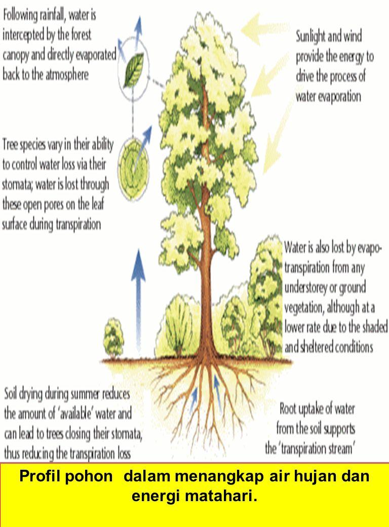 Profil pohon dalam menangkap air hujan dan energi matahari.