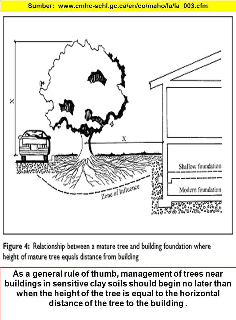 Sumber: www.cmhc-schl.gc.ca/en/co/maho/la/la_003.cfm As a general rule of thumb, management of trees near buildings in sensitive clay soils should begin no later than when the height of the tree is equal to the horizontal distance of the tree to the building.
