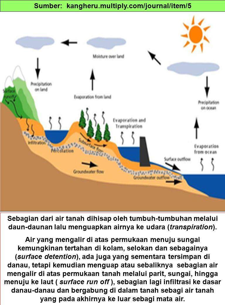 Sebagian dari air tanah dihisap oleh tumbuh-tumbuhan melalui daun-daunan lalu menguapkan airnya ke udara (transpiration).