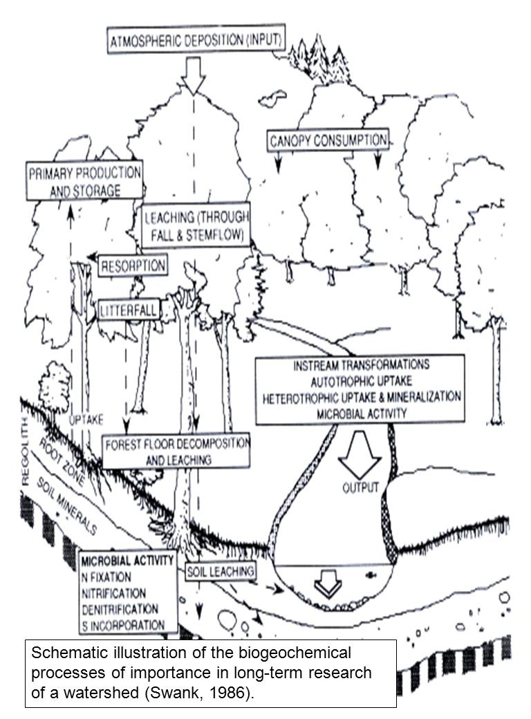 4 Schematic illustration of the biogeochemical processes of importance in long-term research of a watershed (Swank, 1986).