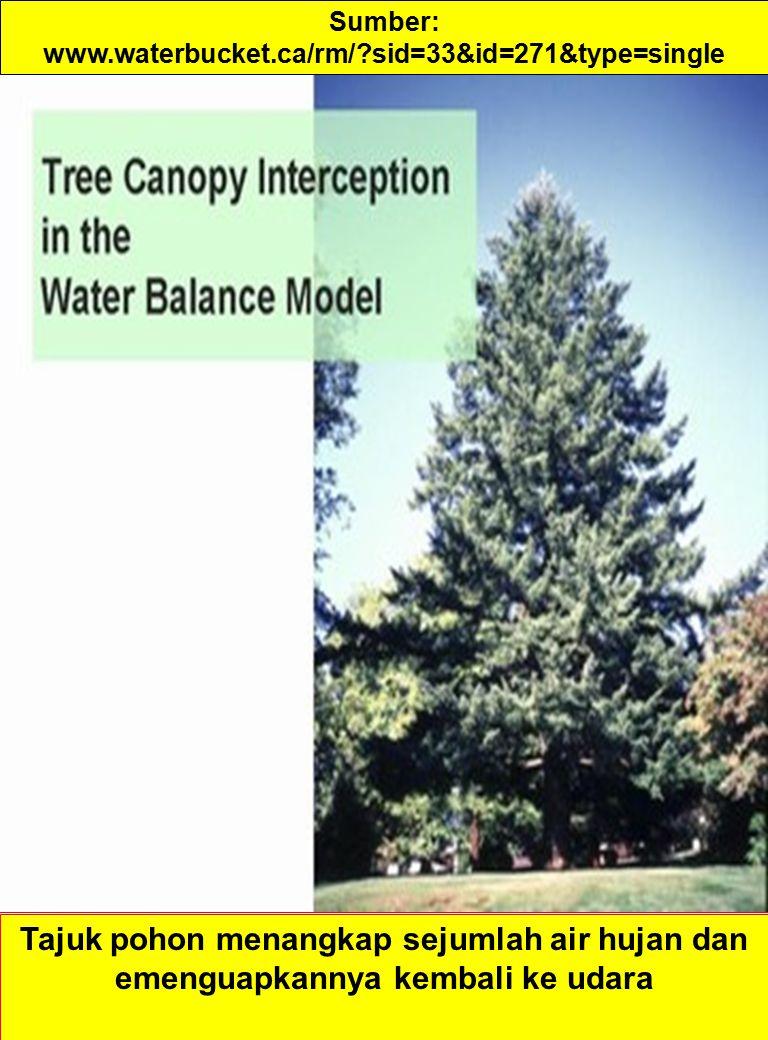 Sumber: www.waterbucket.ca/rm/ sid=33&id=271&type=single Tajuk pohon menangkap sejumlah air hujan dan emenguapkannya kembali ke udara