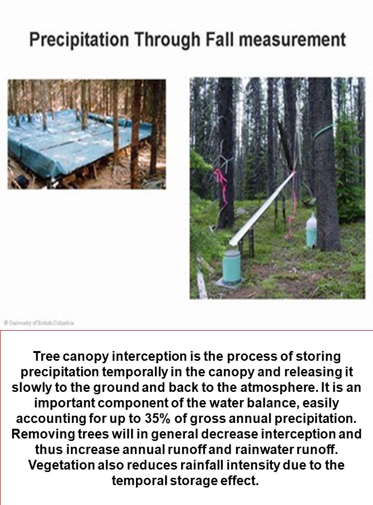 Sumber: wwa.colorado.edu/treeflow/lees/treering.html