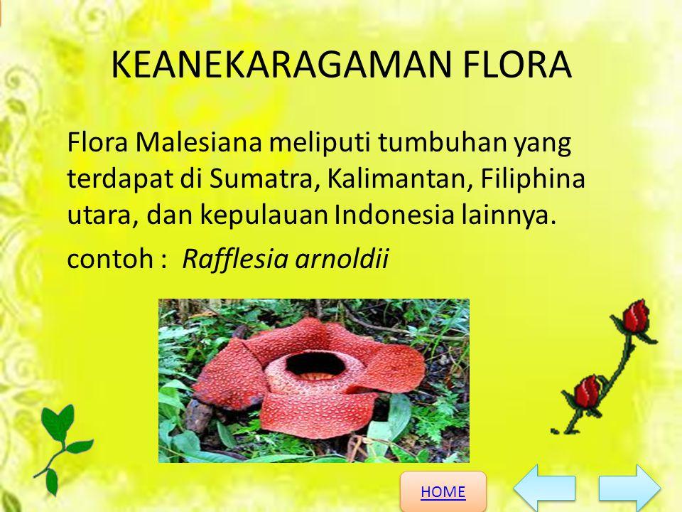 HOME HOME KEANEKARAGAMAN HAYATI KEANEKARAGAMAN FLORA Flora Malesiana meliputi tumbuhan yang terdapat di Sumatra, Kalimantan, Filiphina utara, dan kepu