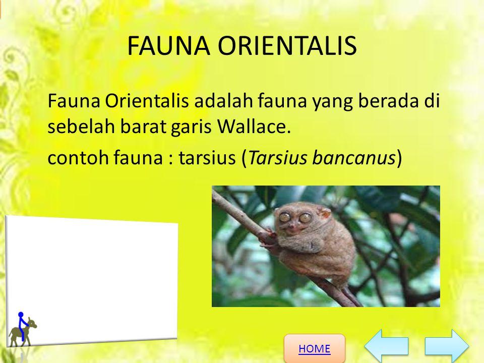 HOME HOME KEANEKARAGAMAN HAYATI FAUNA ORIENTALIS Fauna Orientalis adalah fauna yang berada di sebelah barat garis Wallace. contoh fauna : tarsius (Tar