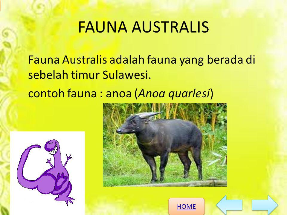 HOME HOME KEANEKARAGAMAN HAYATI FAUNA AUSTRALIS Fauna Australis adalah fauna yang berada di sebelah timur Sulawesi. contoh fauna : anoa (Anoa quarlesi