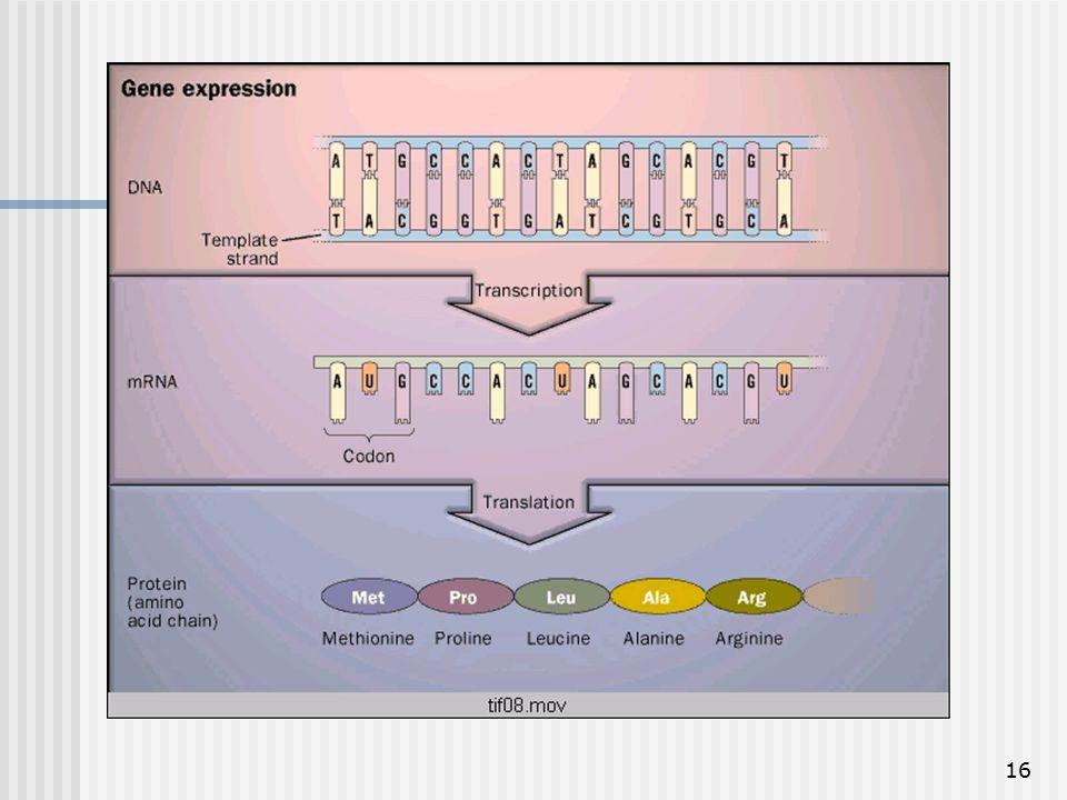 16 Ekspresi gen