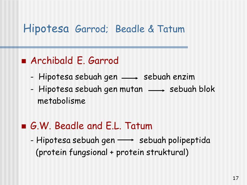 17 Archibald E. Garrod - Hipotesa sebuah gen sebuah enzim - Hipotesa sebuah gen mutan sebuah blok metabolisme G.W. Beadle and E.L. Tatum - Hipotesa se