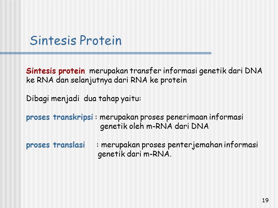 19 Sintesis protein merupakan transfer informasi genetik dari DNA ke RNA dan selanjutnya dari RNA ke protein Dibagi menjadi dua tahap yaitu: proses tr