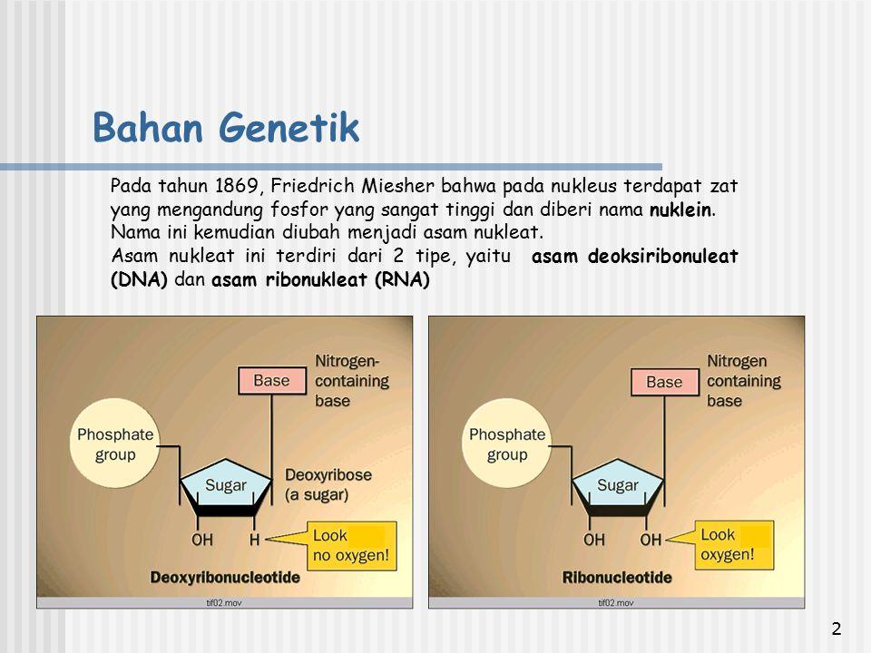 3 1.DNA/RNA tersusun dari subunit-subunit yang disebut nucleotida.