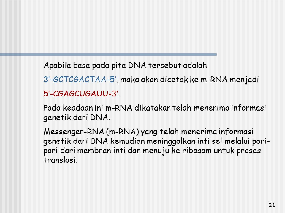 21 Apabila basa pada pita DNA tersebut adalah 3'-GCTCGACTAA-5', maka akan dicetak ke m-RNA menjadi 5'-CGAGCUGAUU-3'. Pada keadaan ini m-RNA dikatakan