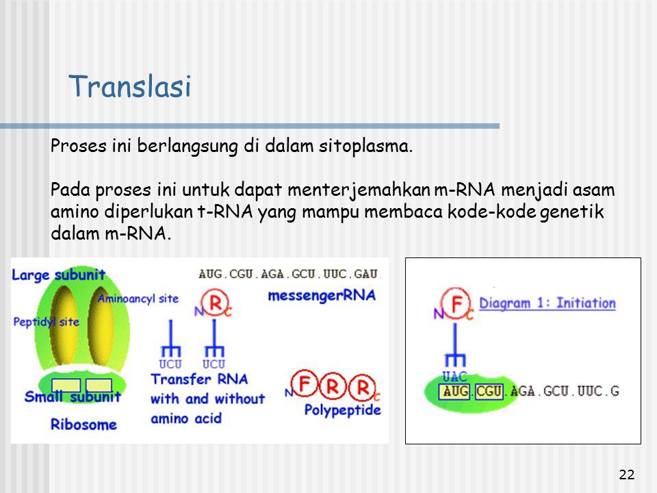 22 Proses ini berlangsung di dalam sitoplasma. Pada proses ini untuk dapat menterjemahkan m-RNA menjadi asam amino diperlukan t-RNA yang mampu membaca