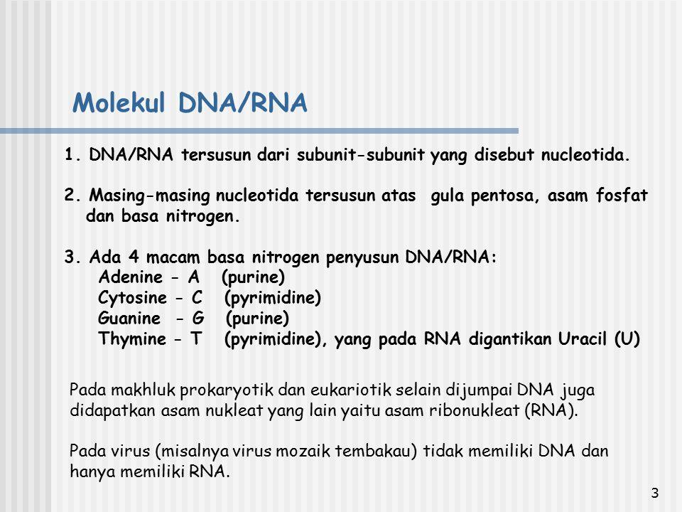 3 1. DNA/RNA tersusun dari subunit-subunit yang disebut nucleotida. 2. Masing-masing nucleotida tersusun atas gula pentosa, asam fosfat dan basa nitro