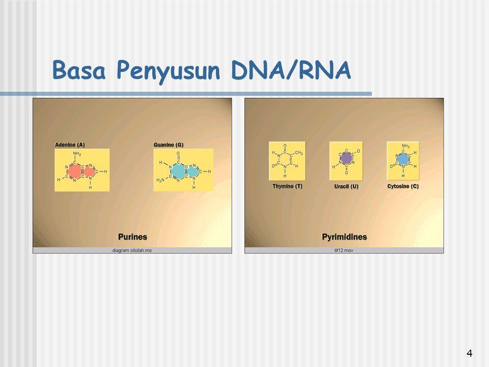 5 Jumlah basa purine sebanding dengan jumlah basa pyrimidine (A+G) = (C+T) Jumlah basa adenine sebanding dengan jumlah basa thymine A = T Jumlah basa guanine sebanding dengan jumlah basa cytosine G = C CHARGAFF`s Ratios atau CHARGAFF`s Rule Contoh: Diketahui bahwa kandungan Adenin dari molekul DNA suatu makhluk hidup adalah 20%, maka: A = T (A = 20% ; T = 20%) A + T = 40% C + G = 100% - 40% = 60%, sehingga kandungan C = 30% dan G = 30% Aturan CHARGAFF