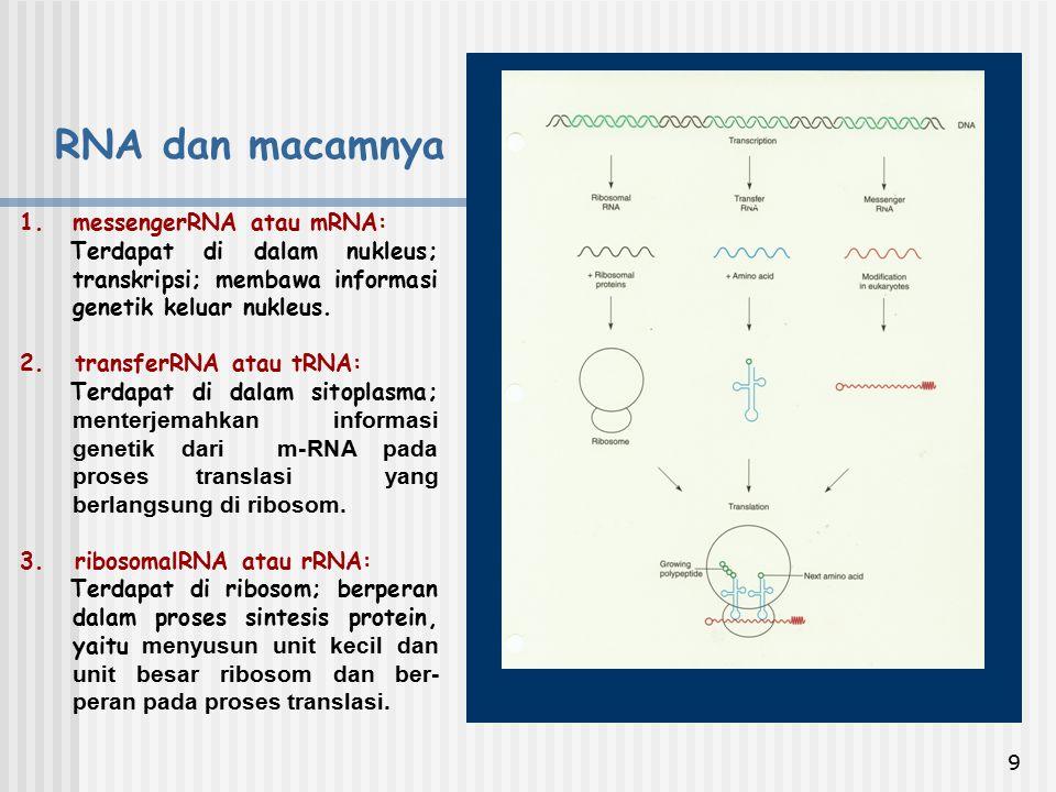 9 1.messengerRNA atau mRNA: Terdapat di dalam nukleus; transkripsi; membawa informasi genetik keluar nukleus. 2. transferRNA atau tRNA: Terdapat di da
