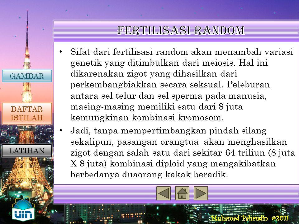 Muhamad Pahrudin @2011 GAMBAR DAFTAR ISTILAH LATIHAN Reproduksi Seksual Penyebab Variasi Genetik