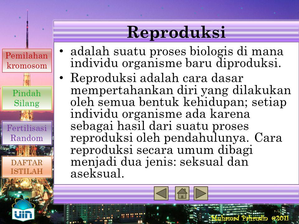 Muhamad Pahrudin @2011 Sifat dari fertilisasi random akan menambah variasi genetik yang ditimbulkan dari meiosis. Hal ini dikarenakan zigot yang dihas