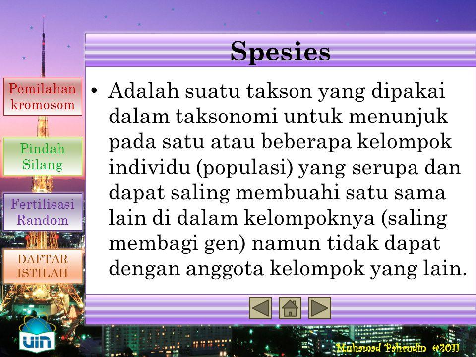 Muhamad Pahrudin @2011 Fertilisasi Adalah peleburan dua gamet yang dapat berupa nukleus atau sel-sel bernukleus untuk membentuk sel tunggal (zigot) at