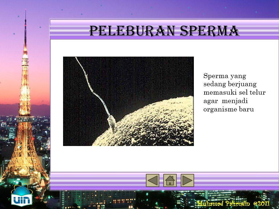 Muhamad Pahrudin @2011 organisme Reproduksi Seksual Penyebab Variasi Genetik Kepiting sebagai contoh organisme