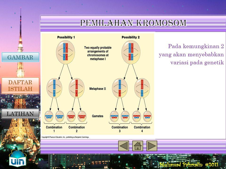 Muhamad Pahrudin @2011 Reproduksi Seksual Penyebab Variasi Genetik Rumus jumlah kemungkinan kombinasi secara independen adalah 2 n. Dengan n merupakan