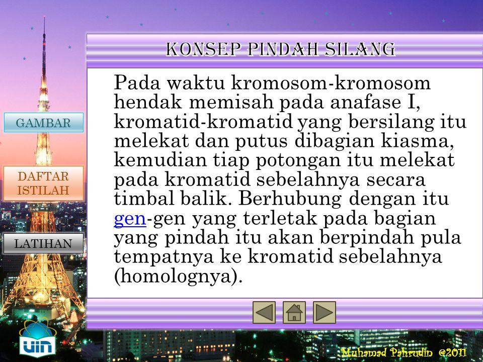 Muhamad Pahrudin @2011 Pindah silang merupakan proses penukaran segmen dari kromatin-kromatin bukan kakak beradik (nonsister chromatids ) dari sepasan