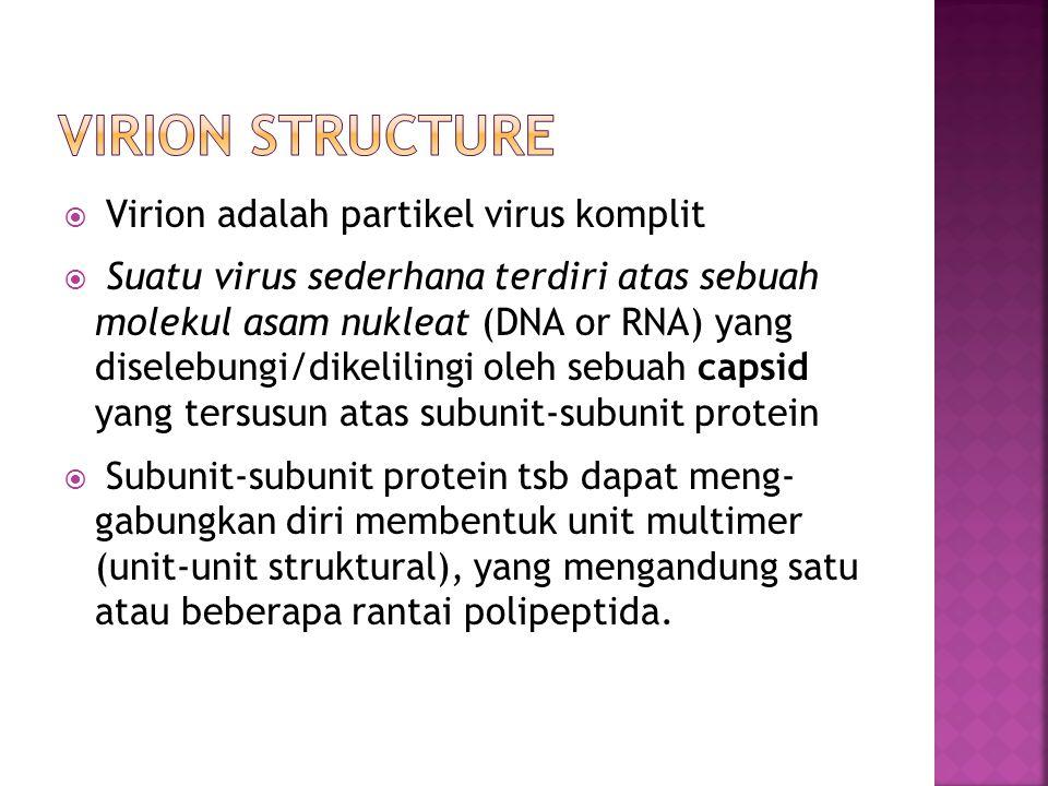  Virion adalah partikel virus komplit  Suatu virus sederhana terdiri atas sebuah molekul asam nukleat (DNA or RNA) yang diselebungi/dikelilingi oleh sebuah capsid yang tersusun atas subunit-subunit protein  Subunit-subunit protein tsb dapat meng- gabungkan diri membentuk unit multimer (unit-unit struktural), yang mengandung satu atau beberapa rantai polipeptida.