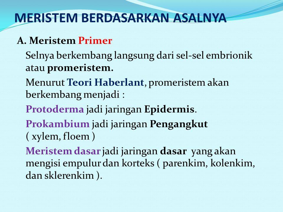 MERISTEM BERDASARKAN ASALNYA A.