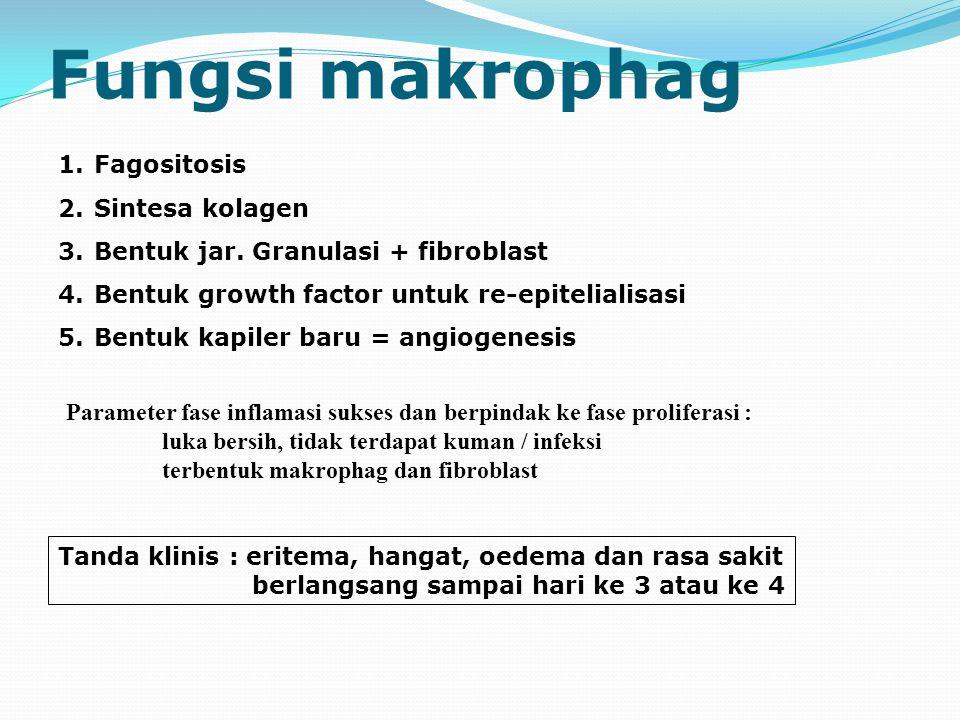 Fungsi makrophag 1.Fagositosis 2.Sintesa kolagen 3.Bentuk jar.
