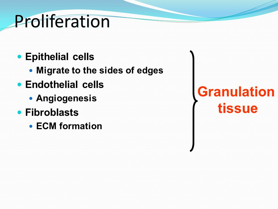 Proliferation Epithelial cells Migrate to the sides of edges Endothelial cells Angiogenesis Fibroblasts ECM formation Granulation tissue
