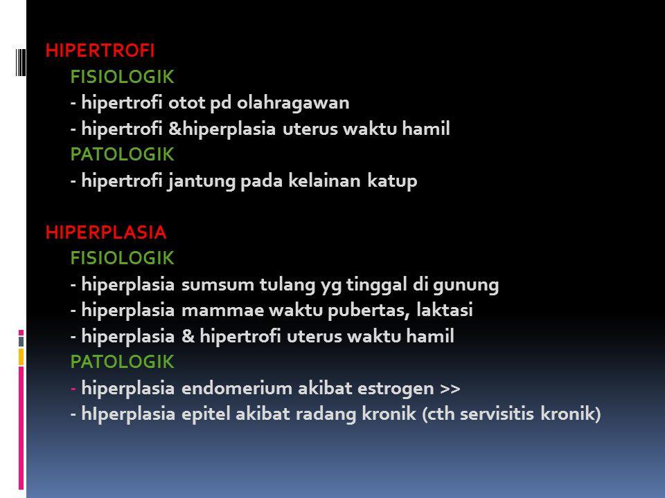 HIPERTROFI FISIOLOGIK - hipertrofi otot pd olahragawan - hipertrofi &hiperplasia uterus waktu hamil PATOLOGIK - hipertrofi jantung pada kelainan katup