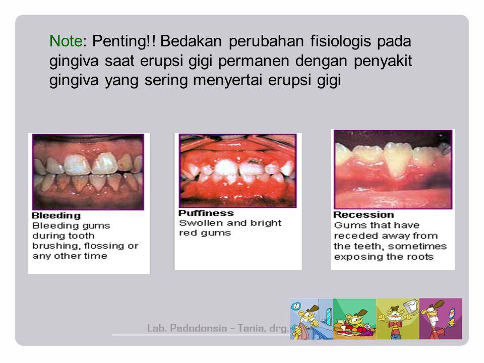 Note: Penting!! Bedakan perubahan fisiologis pada gingiva saat erupsi gigi permanen dengan penyakit gingiva yang sering menyertai erupsi gigi